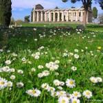Paestum flowers